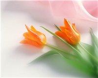 Цветочки-c1
